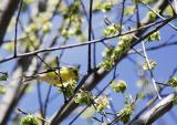spring anounser