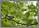 litle birdie...
