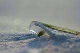 Algues glacée_Frozen algae