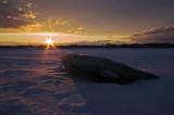 Bloc de glace forme de phoque