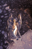 Sculpture de glace naturelle