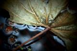 Les feuilles mortes se ramassent a la pelle...