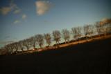 Autumn Mood 4