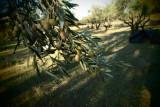 still many left ro harvest...