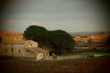 Pine -Trees