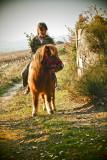 Choubidou, the poney