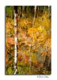 Autumn Reflection #3