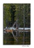 Siesta Lake Reflection