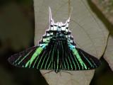 Moths at Cristalino Jungle Lodge
