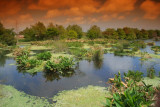 Lakodahatchee Wetlands