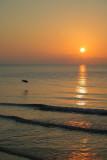 Sunrise in May Bird