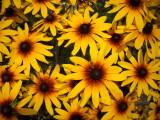 flowers 015.JPG