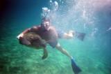 Maui - Sea Turtle 2