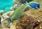 Maldives underwater: the most impressive aquarium of Mother Nature