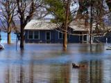 Spring Flood 3-09 06.jpg