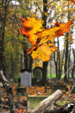on Jewish cemetery- Lotnicza street