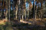 The forest Chrzastawa