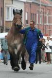 Paardenkeuring Drongen
