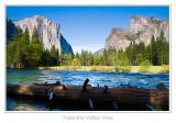 Yosemite, Sequoia and Kings Canyon - May 2009