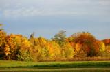 Autumn in Nivaa Denmark