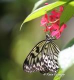 Butterfly Farm - St. Martin