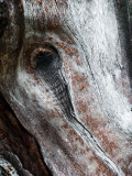 Horse Head In Wood Revisited