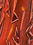 Manzanita Tree Bark Patterns