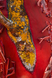 Manzanita and Lichen Colors