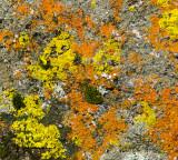 Colorful Lichen Display