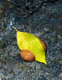 Random Leaves in a Spring