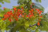 Flora on Santa Cruz