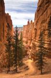 Along the Navajo Loop Trail