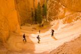 Climbing Up the Navajo Loop Trail