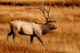 Colorado and Yellowstone Fall 2010