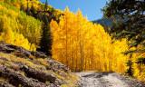 More Aspen Groves