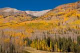 Aspen Covering Mountainside