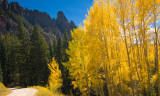 Blowing Aspen on Trail to Alta Lakes