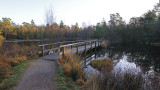 The green winter - Vejlbo Mose 2