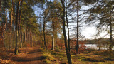 The green winter - Vejlbo Mose 4