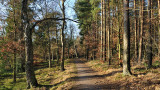 The green winter - Vejlbo Mose 3