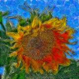 sunwacked starry.jpg
