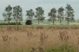 September 15 - Row of trees
