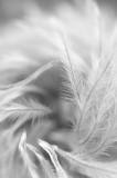 September 17 - Fuzzy Whirl