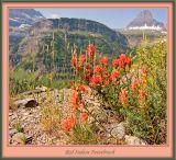 IMGP5916w_Red Indian Paintbrush.jpg