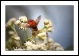 Spiky fly