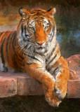 Portrait of a TigerOrlando, FL