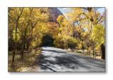 Fall ColorsZion Nat'l Park, UT