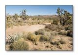 Desert SceneMojave Nat'l Preserve, CA