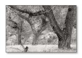 Three TreesZion Nat'l Park, UT