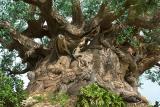 Tree of Life DetailDisney's Animal Kingdom